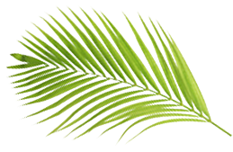 Palm Branch Small